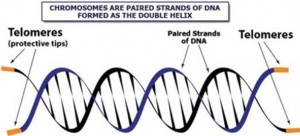 telomeres and dna chromosones testing in Wilmington NC